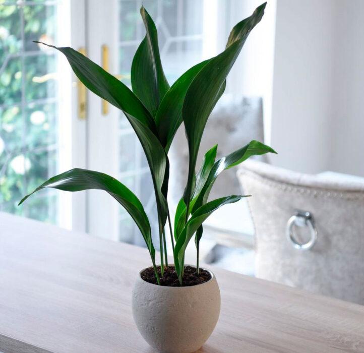 цветы на кухне на стене  цветы на кухне дизайн  цветы для кухни в тени  съедобные растения для кухни  озеленение кухни  папоротник на кухне  цветущие растения для кухни