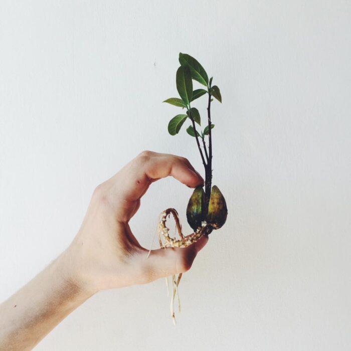 вырастить авокадо +из косточки +в домашних13 048 выращиваем авокадо +из косточки +в домашних условиях10 692 +как посадить косточку авокадо10 692 +как посадить косточку авокадо +в домашних условиях5 180 +как посадить авокадо +из косточки +в домашних5 160 +как прорастить косточку авокадо4 069 авокадо +из косточки фото2 890 авокадо +из косточки +в домашних фото2 674 авокадо +из косточки +в домашних условиях фото2 662 выращивание авокадо +из косточки2 068 выращивание авокадо +из косточки +в домашних1 929 выращивание авокадо +в домашних условиях +из косточки1 928 +как прорастить косточку авокадо +в домашних условиях1 667 +как прорастить авокадо +из косточки +в домашних1 650 авокадо без косточки1 640 авокадо дома +из косточки1 518 авокадо сколько косточек1 377 косточку авокадо едят1 303 посадить косточку авокадо фото1 285 авокадо +в горшке +из косточки1 269 посадить косточку авокадо +в домашних условиях фото1 263 можно вырастить авокадо +из косточки1 249 вырастит ли +из косточки авокадо1 248 можно ли вырастить авокадо +из косточки1 094 авокадо +в домашнем горшке +из косточки1 054 авокадо вырастить +из косточки фото1 045 авокадо кожура косточка1 038 можно +есть косточку авокадо958 +что делать +с косточкой авокадо913 косточки плодов авокадо878 едят ли косточку авокадо878 +как сажать авокадо +из косточки868 +как посадить косточку авокадо пошагово859 косточка авокадо +в воде839 можно посадить косточку авокадо743 можно ли +есть косточку авокадо717 +как правильно посадить косточку авокадо716 дерево +из косточки авокадо715 авокадо +из косточки уход708 авокадо +из косточки видео613 +как сажать косточку авокадо +в домашних условиях598 авокадо уход +в домашних условиях +из косточки596 можно ли посадить косточку авокадо585 +как сажать авокадо +из косточки +в домашних582 +что сделать +с косточкой авокадо530 прорастить косточку авокадо фото