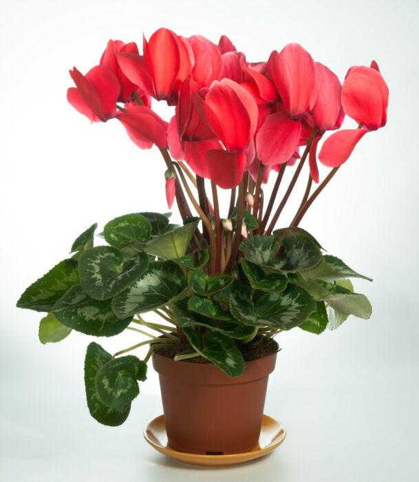 какие растения можно выращивать на кухне